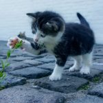 25 Lessons from a Cat